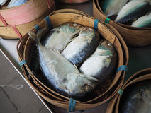 Mackerel fish in basket at market Stock Image