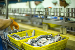 Mackerel fish can factory manufacturing Stock Photography