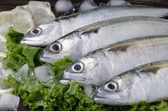 Mackerel Fish Stock Photography