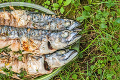 Mackerel fish cooked on a grill in a glass plate on the grass Royalty Free Stock Images