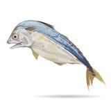 Mackerel fish with digital painting. Mackerel fish with digital painting, illustration and design Royalty Free Stock Images