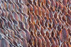 Mackerel, fish dried from sunlight , food in Thailand. Mackerel, fish dried from sunlight , food in Thailand Stock Photo