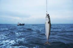 Mackerel fish. On fishing hook on sea background Stock Images
