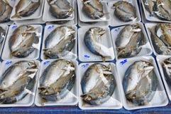 Mackerel Fish in Foam Box Stock Photos