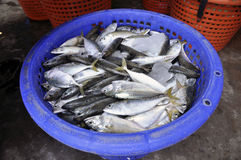 Mackerel Fish Food Fresh Thailand Basket Royalty Free Stock Photo