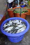 Mackerel Fish Fresh Basket Thailand Stock Photography