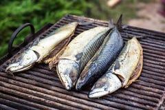 Mackerel fish on grill and hot coals, DOF. Scomber blue mackerel roast, Japanese mackerel roasted, Pacific mackerel, slimy mackere. L, spotted chub mackerel Royalty Free Stock Image