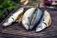 Mackerel fish on grill and hot coals, DOF. Scomber blue mackerel roast, Japanese mackerel roasted, Pacific mackerel, slimy mackere. L, spotted chub mackerel Stock Image