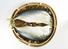 Mackerel fish Royalty Free Stock Photos