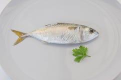 Mackerel fish Royalty Free Stock Image