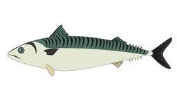 Mackerel fish isolated Stock Photography