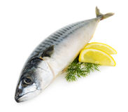 Mackerel fish isolated. On a white Royalty Free Stock Images