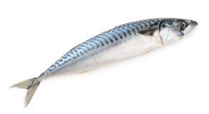 Mackerel fish isolated Stock Photo