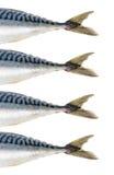 Mackerel fish isolated Royalty Free Stock Photos