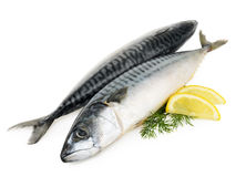 Mackerel fish isolated Royalty Free Stock Photo