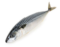 Mackerel fish isolated Stock Images