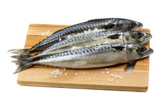 Mackerel fish isolated on white. Raw mackerel fish on cutting board on white background Stock Images