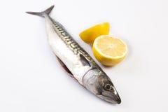Mackerel fish and lemon Stock Photography