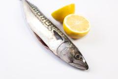 Mackerel fish and lemon Stock Photo