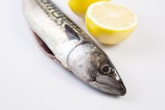 Mackerel fish and lemon Royalty Free Stock Images