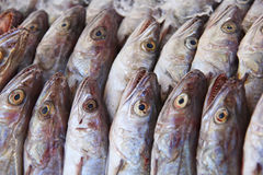 Mackerel fish Royalty Free Stock Image