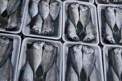 Mackerel Fish in the market. Yummy Yummy Royalty Free Stock Photo