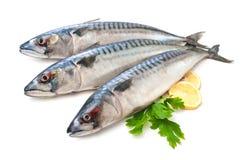 Mackerel Fish. (Scomber scrombrus) over white background Stock Photo