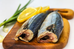 Mackerel Fish Stock Images