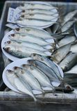 Mackerel fish. Selling in the market in thailand Stock Photo