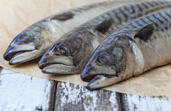 Mackerel Fish Stock Photos