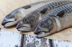 Mackerel Fish stock photos