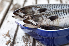 Mackerel Fish Royalty Free Stock Images