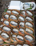 Mackerel fish. Used as food in Thailand is sold fresh  and steamed Royalty Free Stock Photography