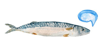 Mackerel fish. Watrcolor image of mackerel fish on white background.  Image has speech bubble for your text Royalty Free Stock Photo