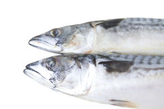 Mackerel fish. On white background Stock Image