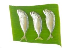 Mackerel fishes on banana leaf Stock Images