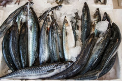 Mackerel fishes in a box at the fish market. Freshly caught mackerel fishes on ice in the box on the counter at the fish shop for sale. Mackerel fishes on ice Royalty Free Stock Images
