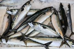 Mackerel fishes in a box at the fish market. Horizontal Stock Images