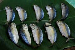 Mackerel fishes line up. Many mackerel fishes line up group background Royalty Free Stock Image
