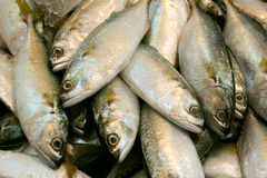 Mackerel fishes in local fish market. Fresh mackerel fishes in local fish market Royalty Free Stock Photo