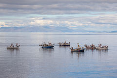 Mackerel Fishing Boats Royalty Free Stock Photography