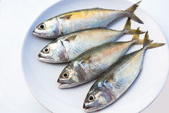Mackerel fishs. Four mackerel fishs on a white dish Stock Images