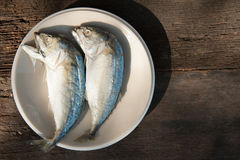 Mackerel fishs. Mackerel and fresh vegetables ingredients for cooking copy space Royalty Free Stock Images