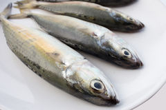 Mackerel fishs. On a white dish Stock Photography