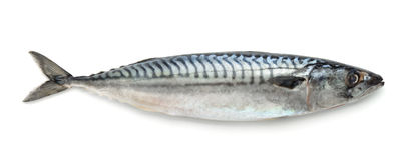 Mackerel Stock Photography