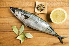 Mackerel fresh fish next to some laurel leaves, a piece of lemon and some spices on a wooden table. Prepared for cooking royalty free stock images