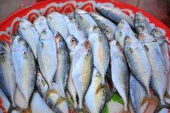 Mackerel. Fresh mackerel fishes in local fish market Royalty Free Stock Images
