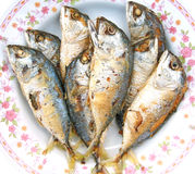 Mackerel fried Stock Image