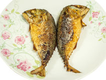 Mackerel fried Stock Photography