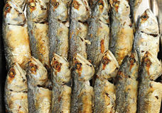 Mackerel fried in the kitchen Stock Image